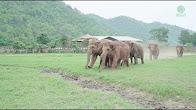 Elephants greet baby