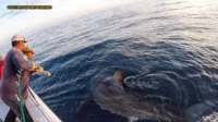 Great white shark catch