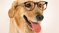 Dog glasses ...