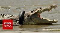 Croc in tire