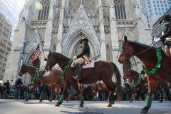 St patrick horses