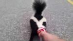 Skunk coke