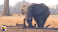 Elephant trough