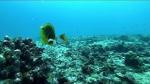 Seychelles reef 342019