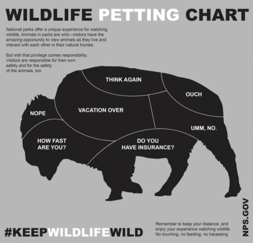 Petting-a-bison-700x671