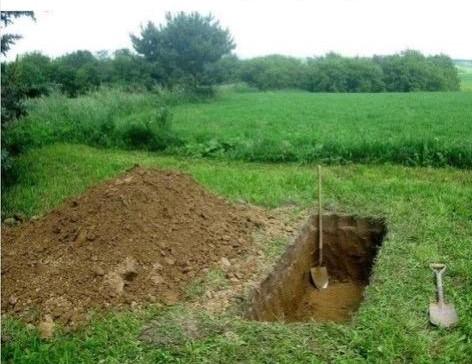 Quarantine planting (2)