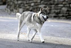 Cuomo dog captain