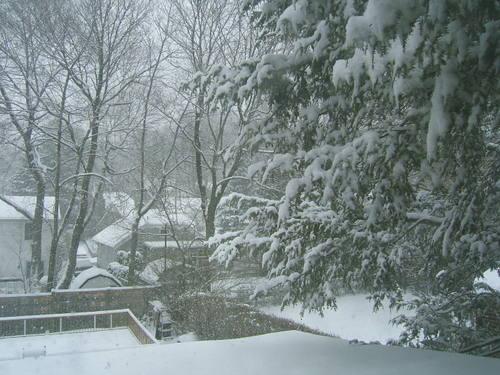 Brigid_snow_22208_014