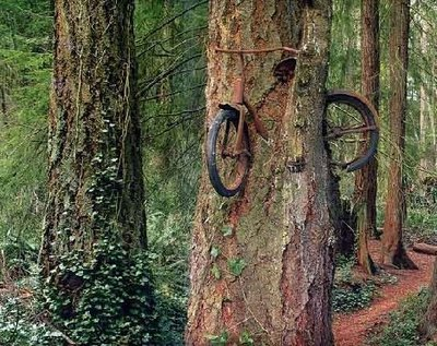 Bike_in_tree