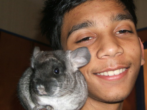 Chinchilla_action_12007_013