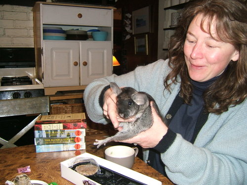 Chinchilla_action_12007_016