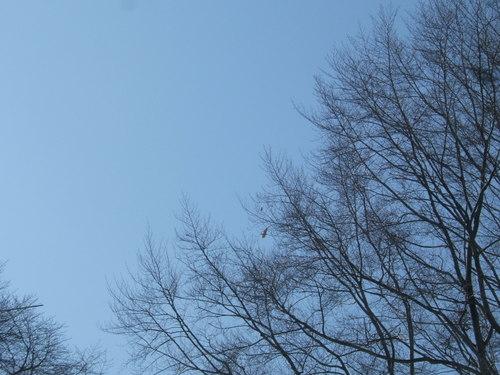Eagle_pix_22107_003