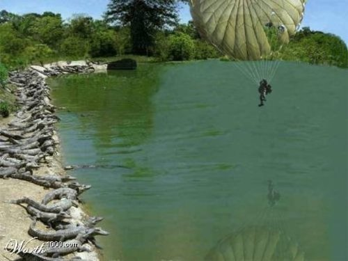 Parachutist_and_gators